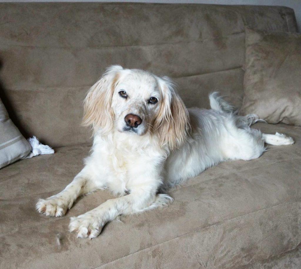 freudenhund_Hund_auf_Couch